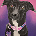Little Black Dog by Tish Wynne