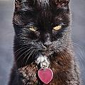 Little Black Kitty by Susie Peek