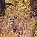 Little Buck by Andrea Goodrich