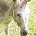 Little Burro by Alice Gipson