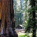Little Cabin In The Woods by Barbara Stellwagen