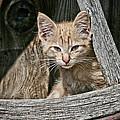 Little Charlie - Kitten By Wagon Wheel - Casper Wyoming by Diane Mintle