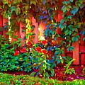 Little Country Scene Pink Flowers Climbing Leaves On Wood Fence Colors Of Quebec Art Carole Spandau by Carole Spandau