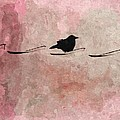 Little Crow In The Pink by Gothicrow Images