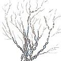 Little Dna Tree by Regina Valluzzi