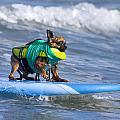 Little Doggie On Surfboard by Nathan Rupert