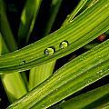 Little Drops by Adam Vance