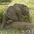Little Elephant Big Log by Michele Burgess