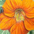 Little Flower by John Meyers