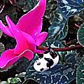 Little Glass Pandas 78 by Sarah Loft