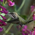 Little Happy Wings  by Saija  Lehtonen
