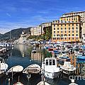 little harbor in Camogli by Antonio Scarpi