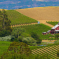 Little House In The Vineyard by Rima Biswas