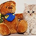 little Kitten with her Teddybear by Doreen Zorn