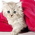 little Kitty by Doreen Zorn