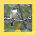 Little Lady Eastern Kingbird 4 by Barb Dalton