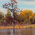 Little Oak II by Sylvia Thornton