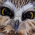 Little Owls by Everet Regal