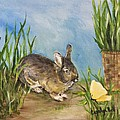 Little Pet Bunny by Carolyn Bell