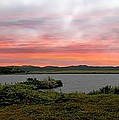 Little Pond Near The Ocean Panorama by Barbara Griffin