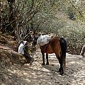 Little Porter with Horse