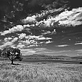 Little Prarie Big Sky - Black And White by Peter Tellone