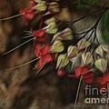 Little Red Flowers by Deborah Benoit