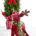 Little Reindeer Christmas Card by Edward Fielding