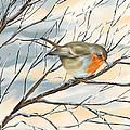 Little Robin by Veronica Minozzi