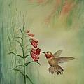 Little Rufous by Gina Gahagan