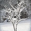 Little Snow Tree by Karen Adams