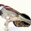 Little Sparrow by Karen Wiles
