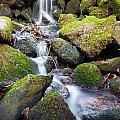 Little Waterfall In Marlay Park by Semmick Photo