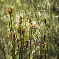 Little Weeds by Belinda Greb