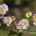 Little Wild Flowers by Deborah Benoit