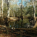 Little Withlacoochee River by Norman Johnson