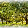Live Oak Journey Paint by Steve Harrington