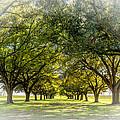 Live Oak Journey Vignette by Steve Harrington