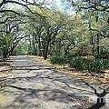 Live Oaks by Chris Selby