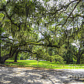 Live Oaks Dripping With Spanish Moss by Dale Powell