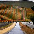 Livermore Vineyard 2 by Karen  W Meyer