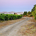 Livermore Vineyard 3 by Karen  W Meyer