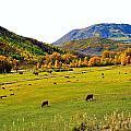 Livestock Grazing In Colorado by Gerald Blaine
