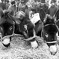 Livestock Market by Joseph Mason
