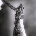 Living Dead Tree - Spooky - Eerie by Jason Politte
