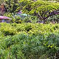 Living Off The Grid In The Waipi'o Valley by Jim Thompson