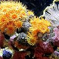 The Living Sea by Bob Slitzan