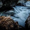 Living Water by Edgar Laureano