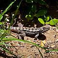 Lizard by Alexander Whadcoat