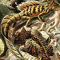 Lizard Detail II by Unknown